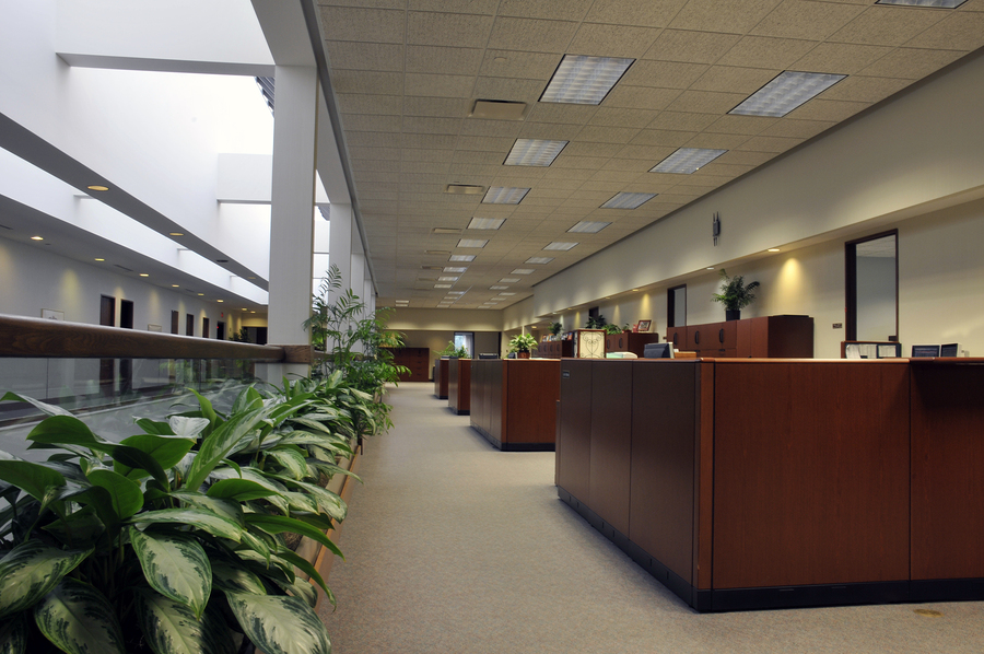Giving Your Office a Natural Glow